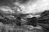 Buttermere tree,Lake in black and white