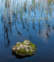 Reflected Reeds Scotland